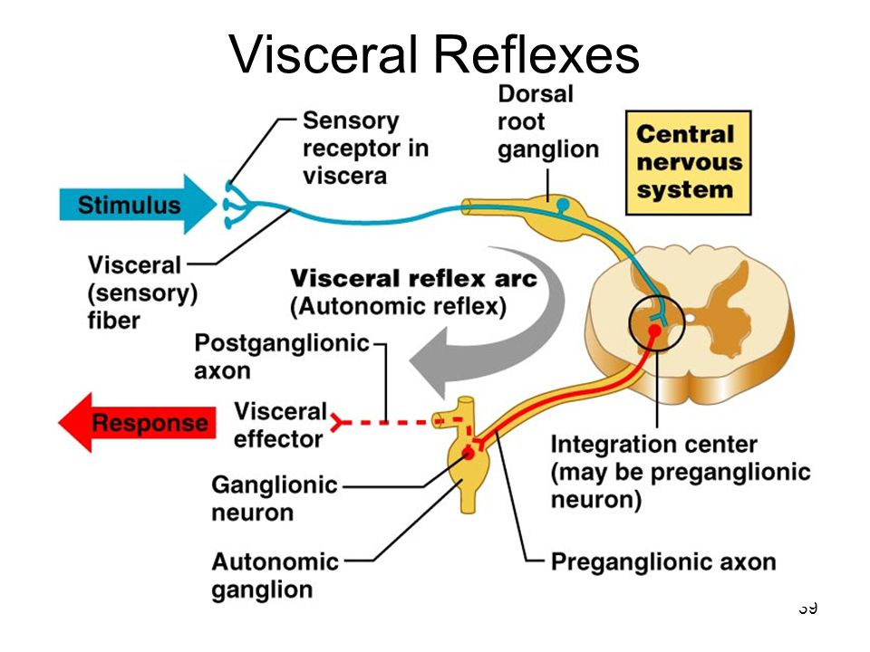Visceral Reflexes