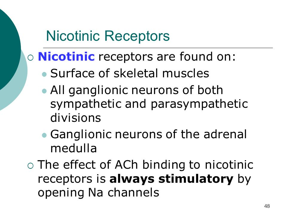 Nicotinic Receptors Nicotinic receptors are found on:
