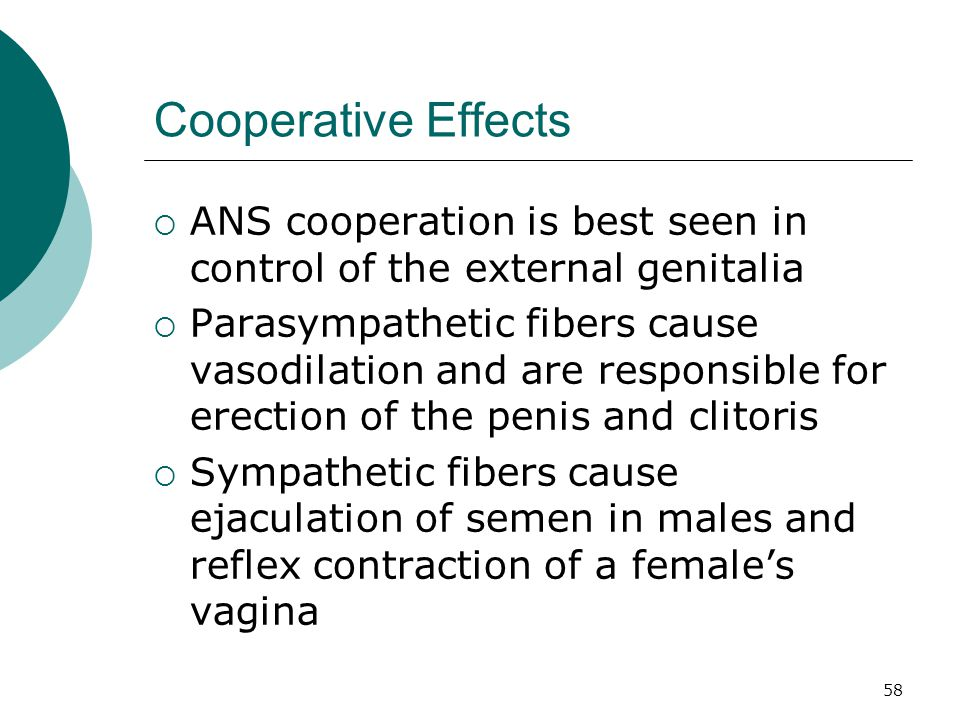 Cooperative Effects ANS cooperation is best seen in control of the external genitalia.