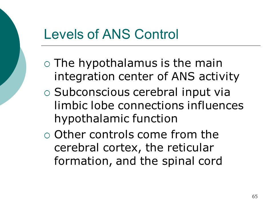 Levels of ANS Control The hypothalamus is the main integration center of ANS activity.