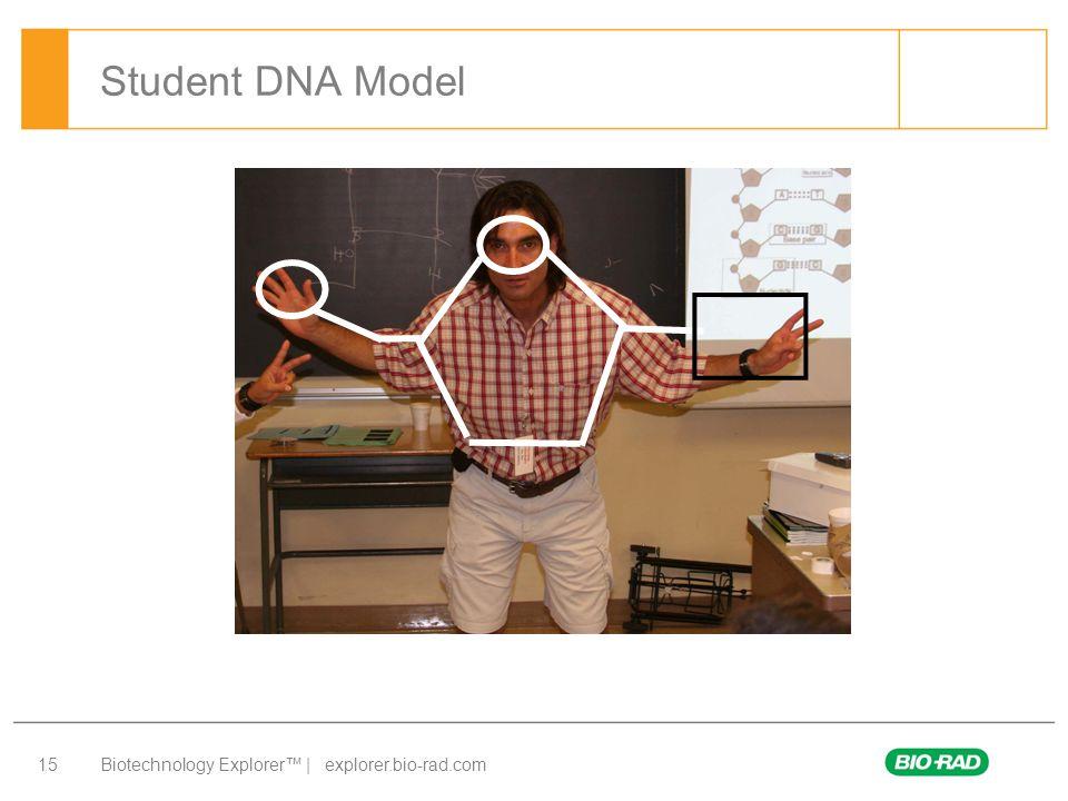 Student DNA Model