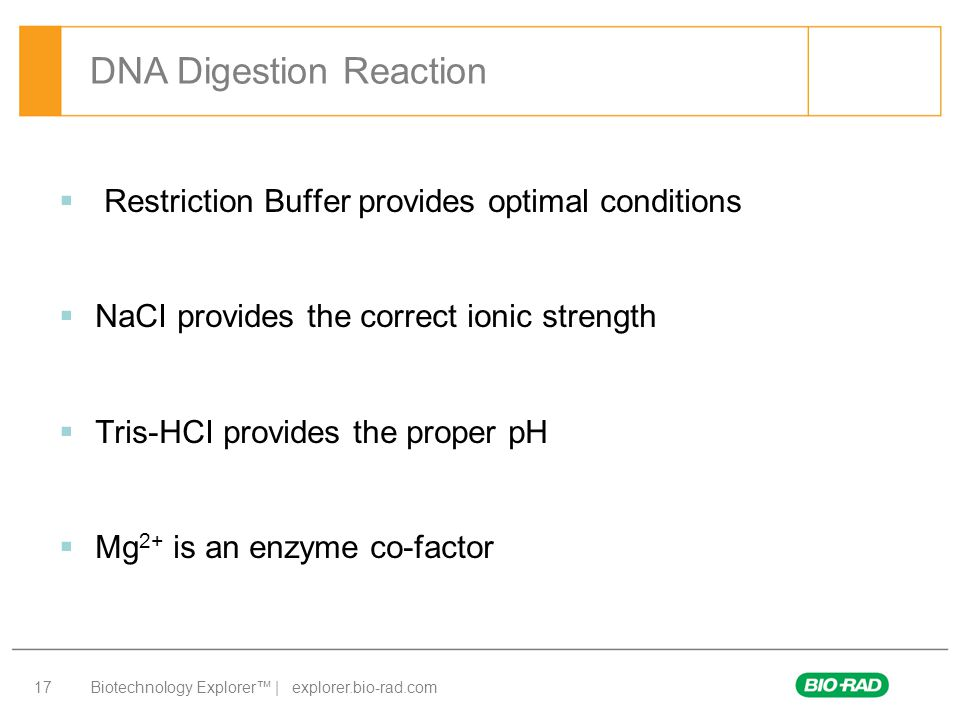 DNA Digestion Reaction