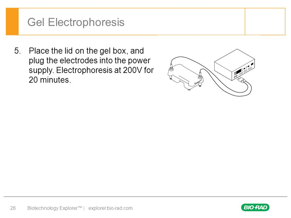 Gel Electrophoresis Place the lid on the gel box, and plug the electrodes into the power supply.