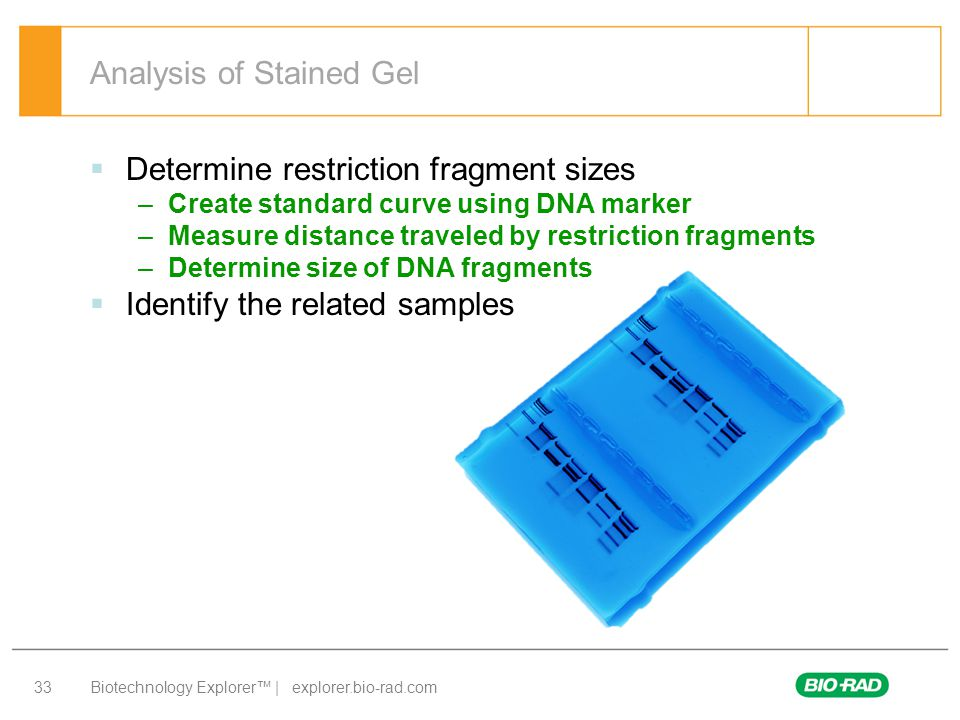 Analysis of Stained Gel