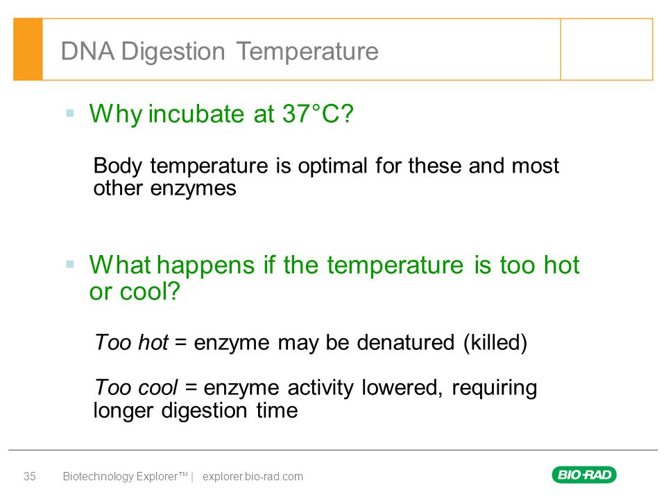 DNA Digestion Temperature
