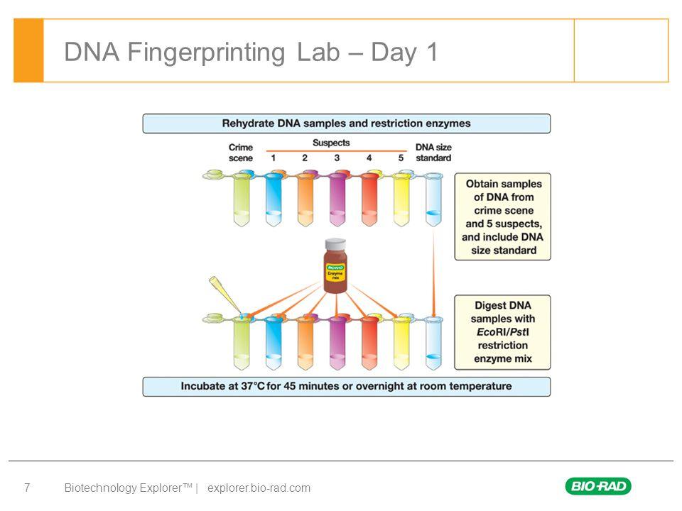DNA Fingerprinting Lab – Day 1