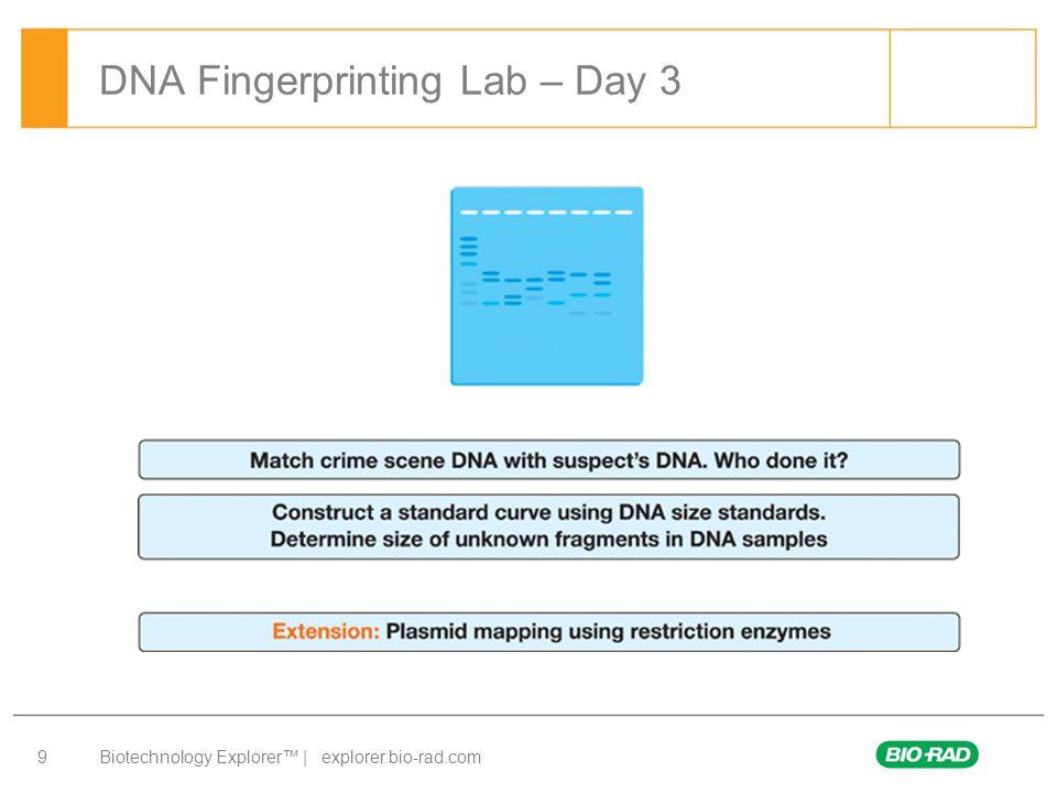 DNA Fingerprinting Lab – Day 3