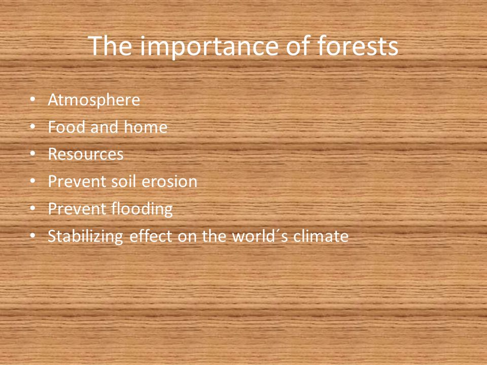 The importance of forests