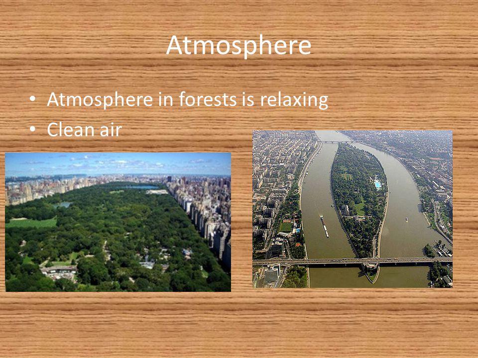 Atmosphere Atmosphere in forests is relaxing Clean air