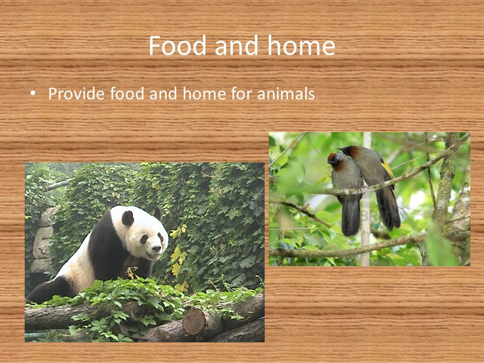 Food and home Provide food and home for animals