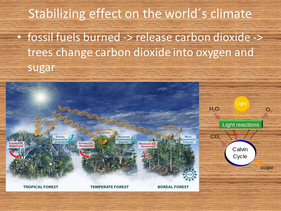 Stabilizing effect on the world´s climate