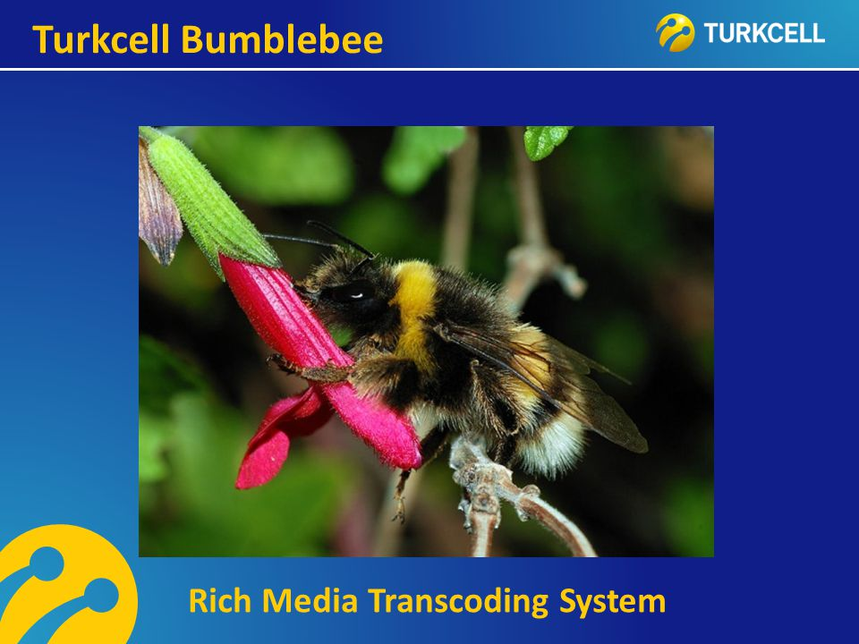 Turkcell Bumblebee Rich Media Transcoding System