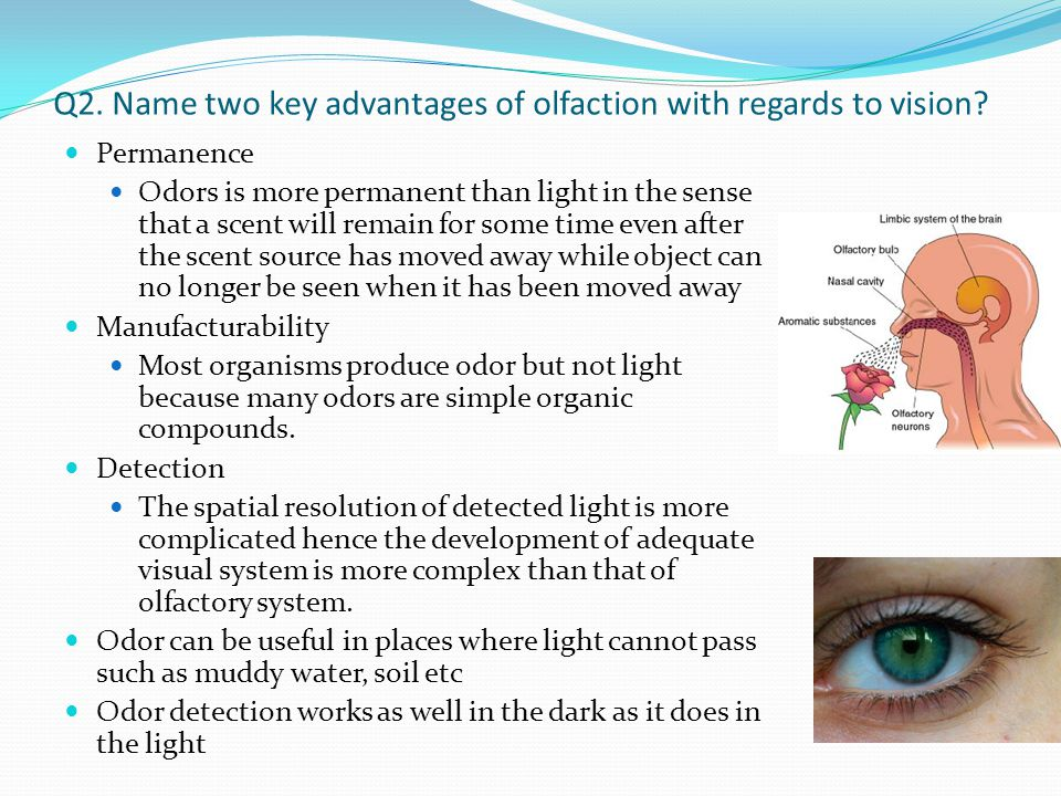 Q2. Name two key advantages of olfaction with regards to vision