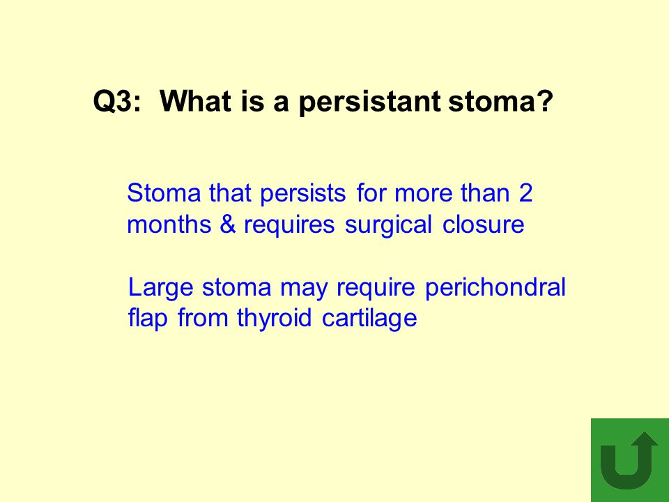 Q3: What is a persistant stoma