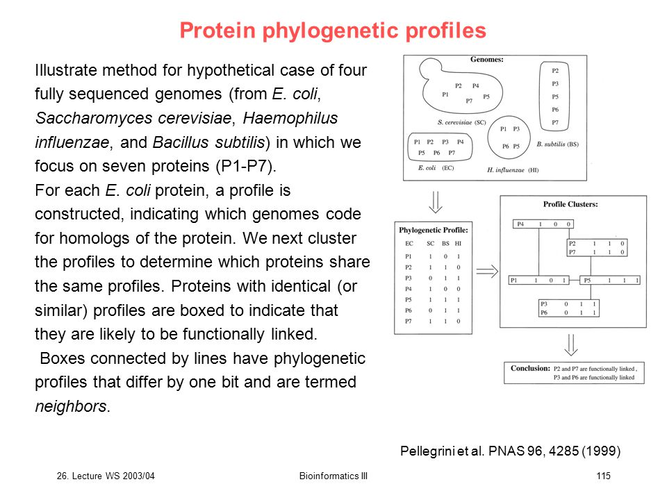 Protein phylogenetic profiles