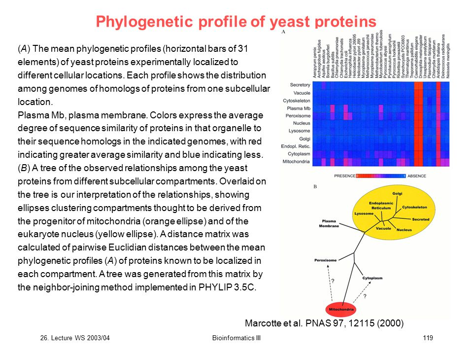 Phylogenetic profile of yeast proteins