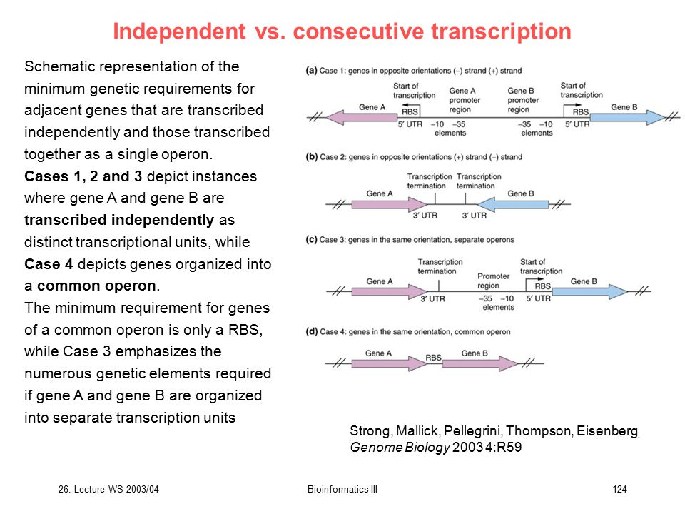 Independent vs. consecutive transcription