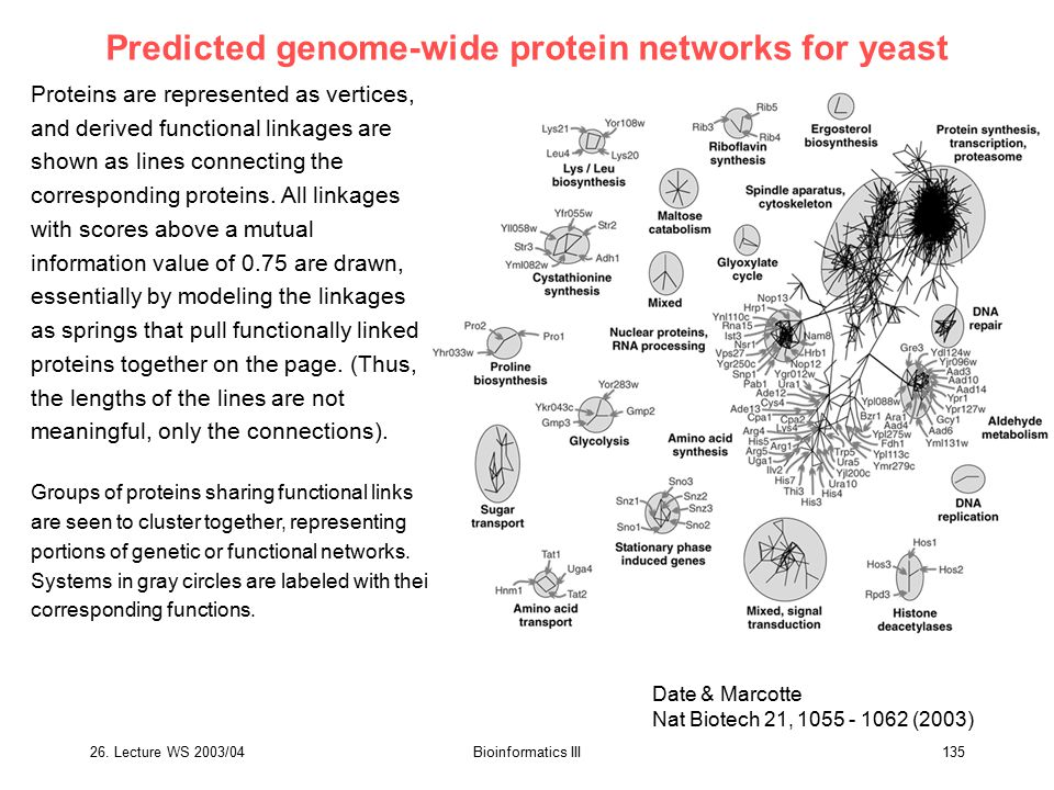 Predicted genome-wide protein networks for yeast