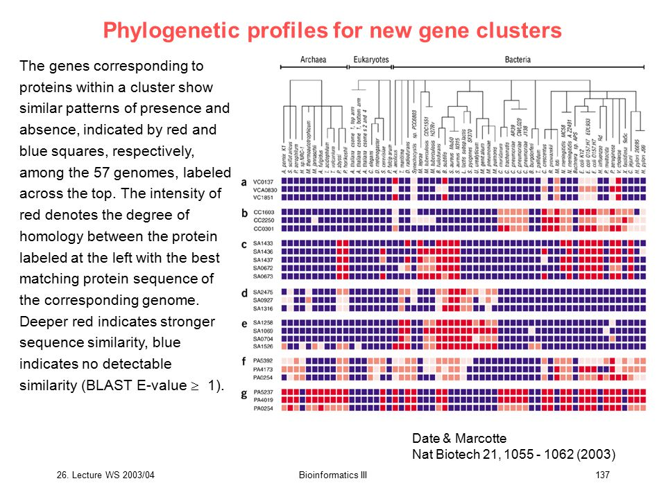 Phylogenetic profiles for new gene clusters