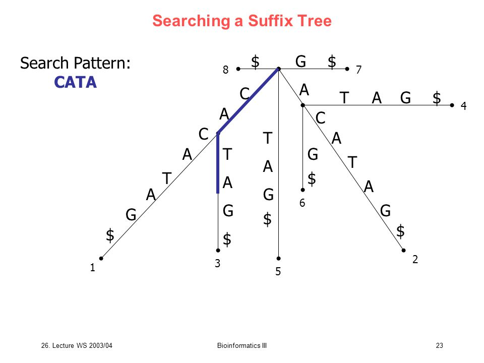 Searching a Suffix Tree