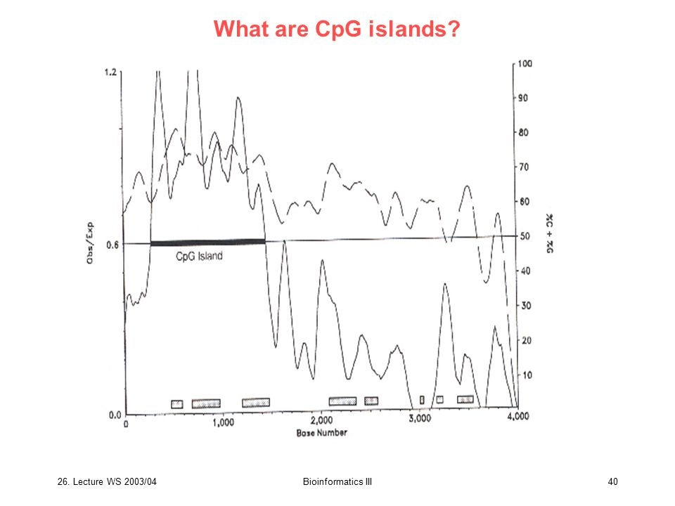 What are CpG islands 26. Lecture WS 2003/04 Bioinformatics III