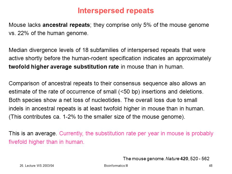 Interspersed repeats Mouse lacks ancestral repeats; they comprise only 5% of the mouse genome. vs. 22% of the human genome.