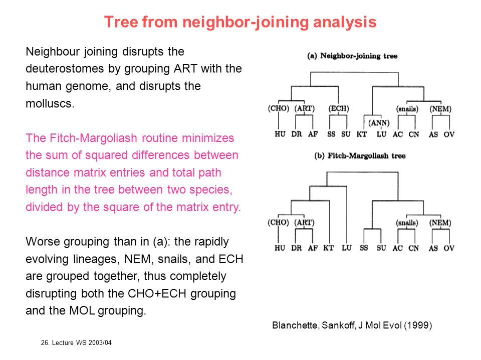 Tree from neighbor-joining analysis