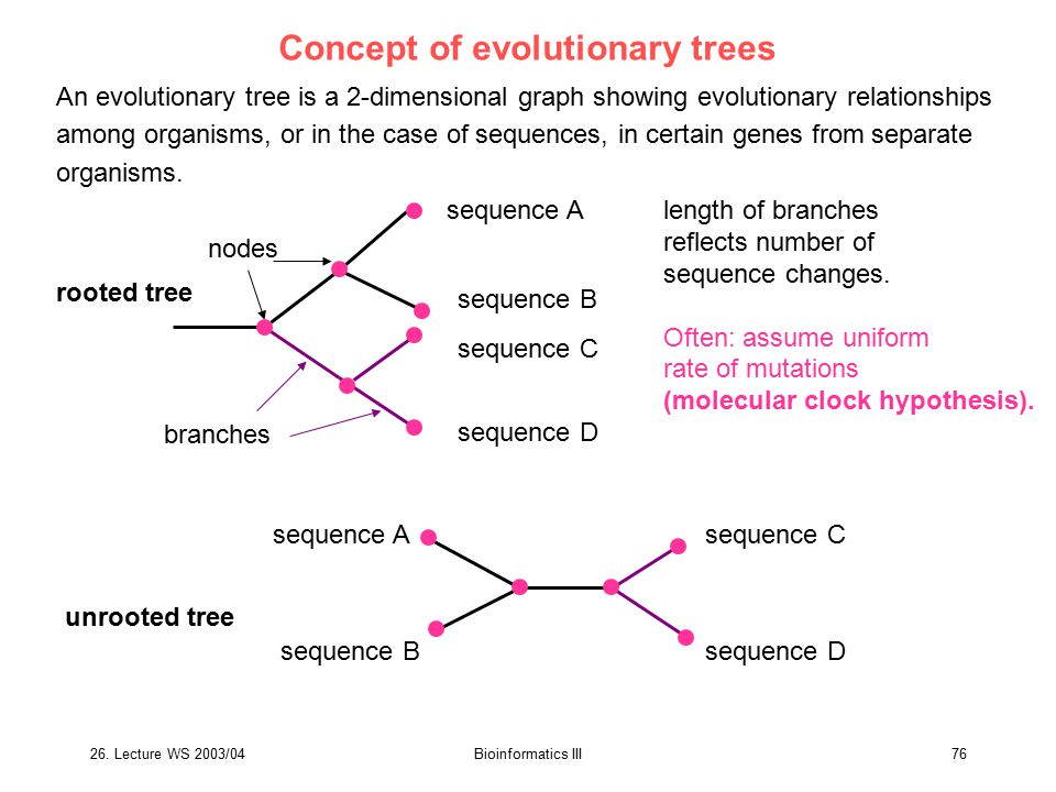 Concept of evolutionary trees