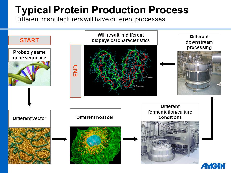 Typical Protein Production Process Different manufacturers will have different processes