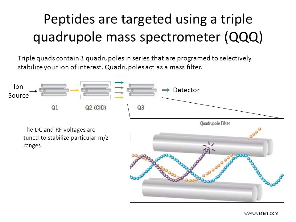 Peptides are targeted using a triple quadrupole mass spectrometer (QQQ)