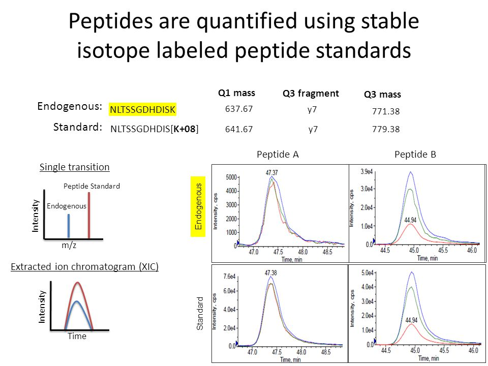 Peptides are quantified using stable isotope labeled peptide standards