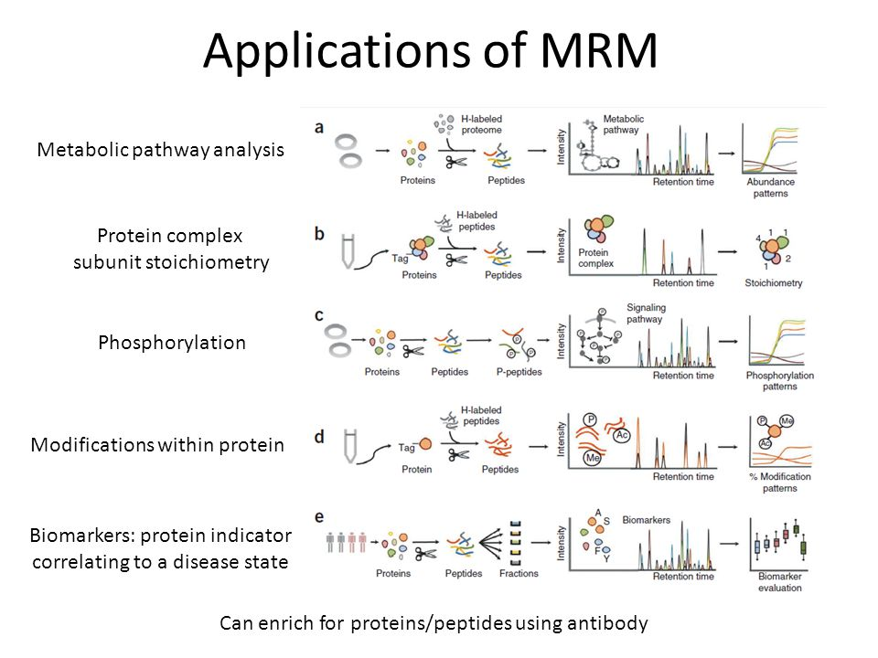 Applications of MRM Metabolic pathway analysis Protein complex