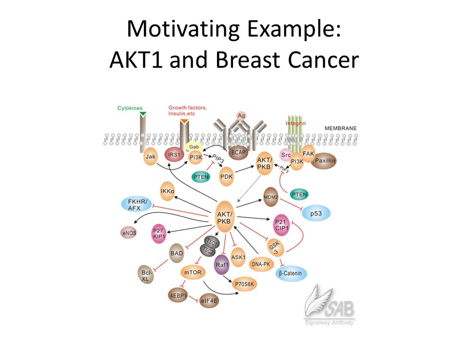 Motivating Example: AKT1 and Breast Cancer