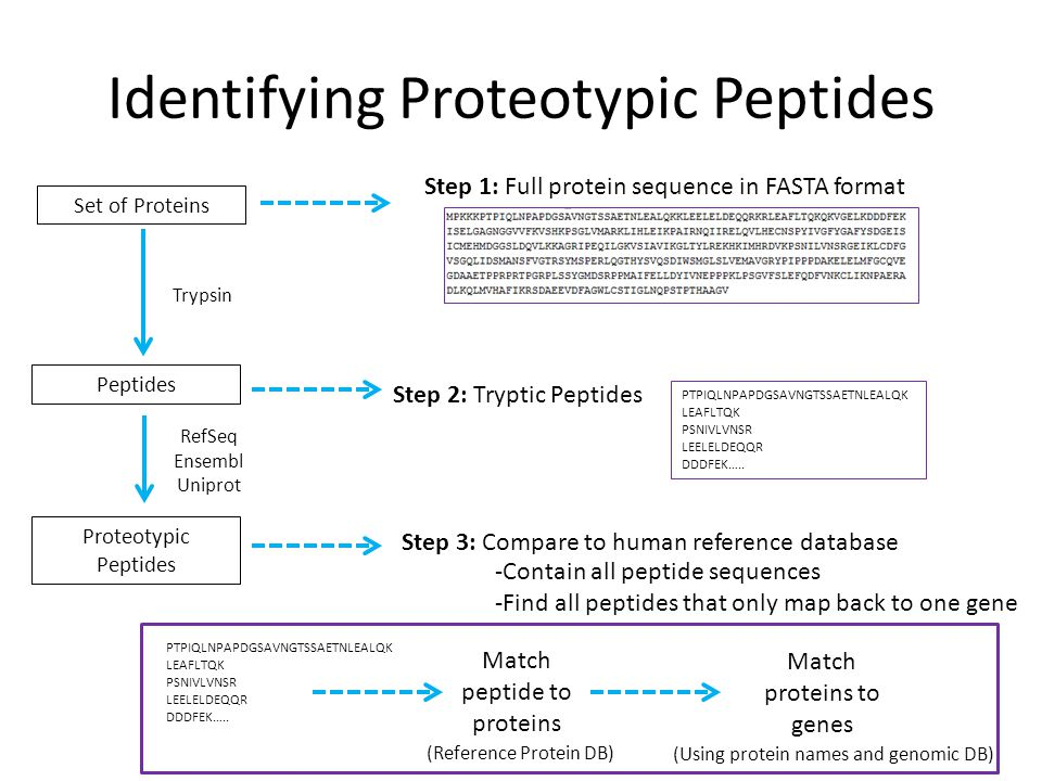 Identifying Proteotypic Peptides