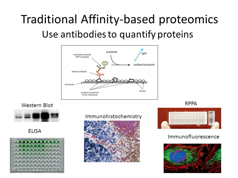 Traditional Affinity-based proteomics