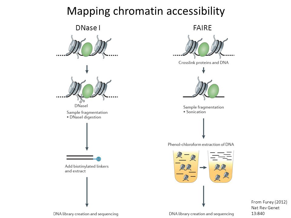 Mapping chromatin accessibility