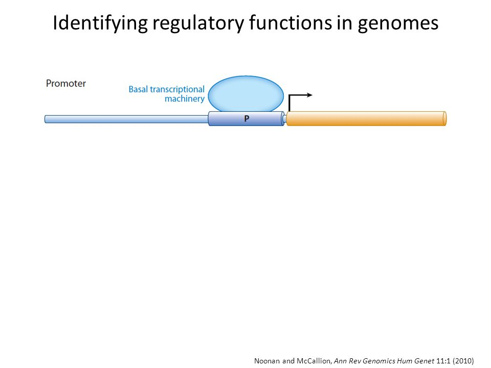 Identifying regulatory functions in genomes
