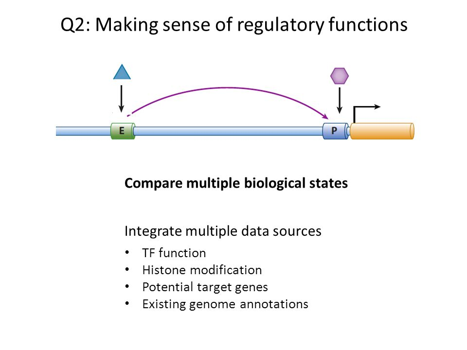 Q2: Making sense of regulatory functions