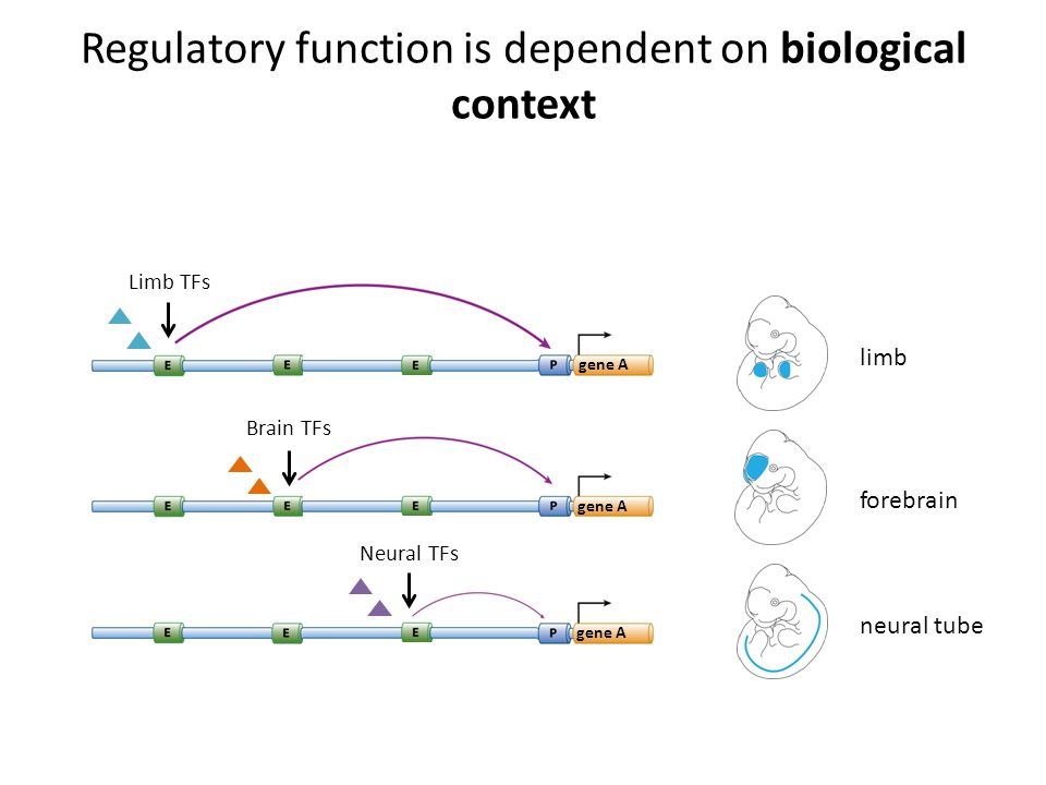 Regulatory function is dependent on biological