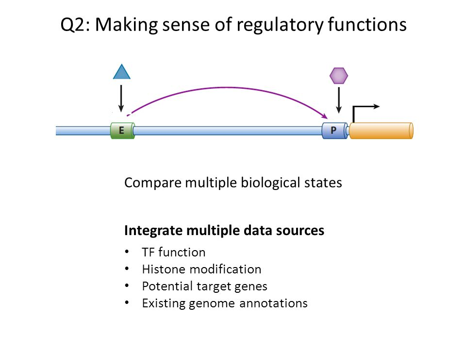Q2: Making sense of regulatory functions