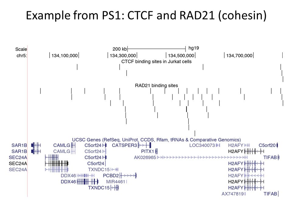 Example from PS1: CTCF and RAD21 (cohesin)