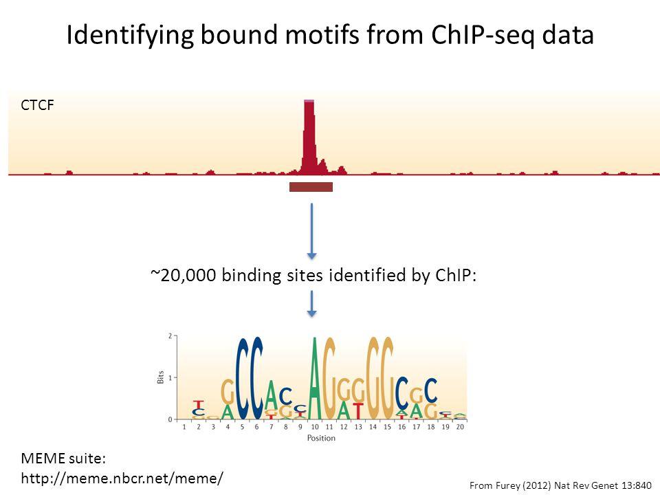 Identifying bound motifs from ChIP-seq data