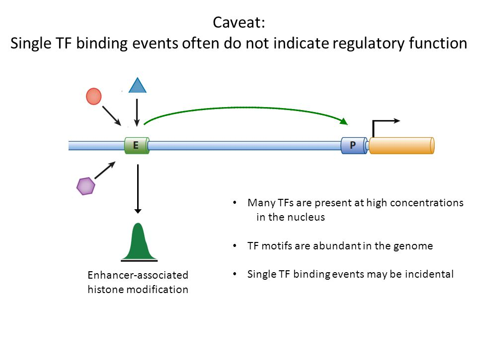 Single TF binding events often do not indicate regulatory function