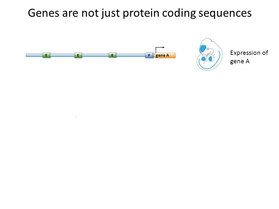 Genes are not just protein coding sequences