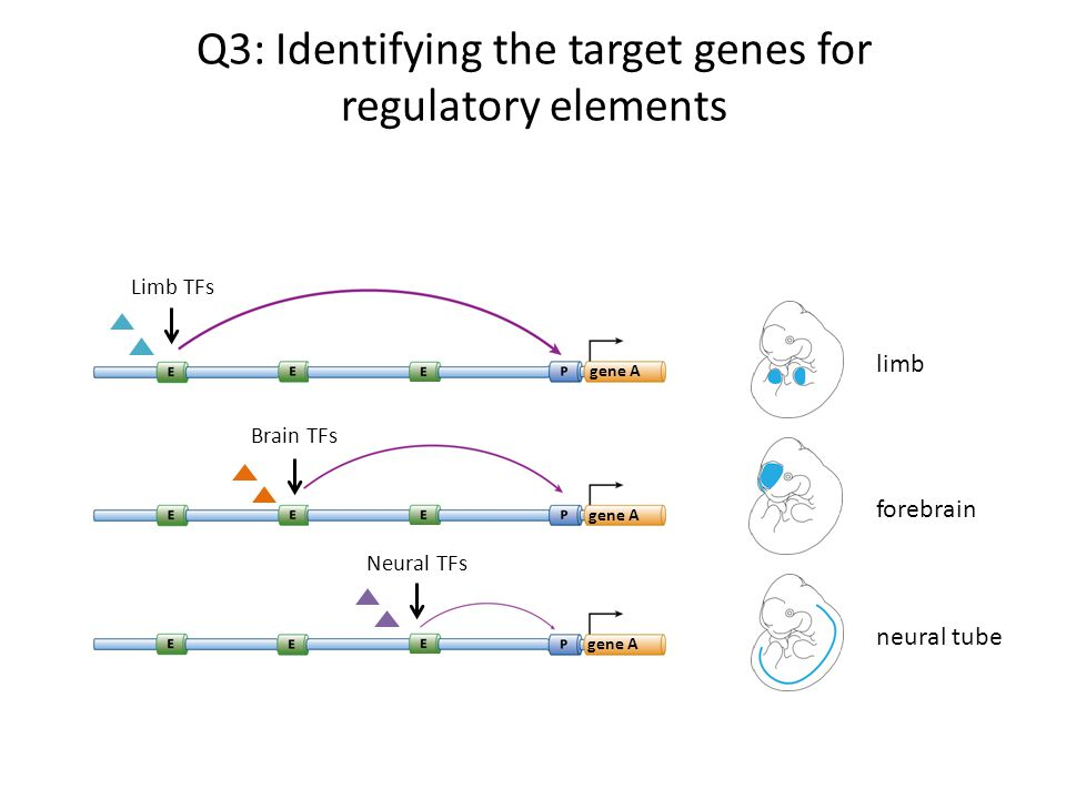Q3: Identifying the target genes for