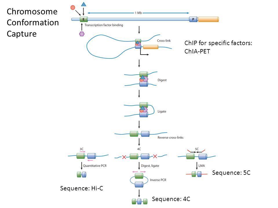 Chromosome Conformation Capture ChIP for specific factors: ChIA-PET