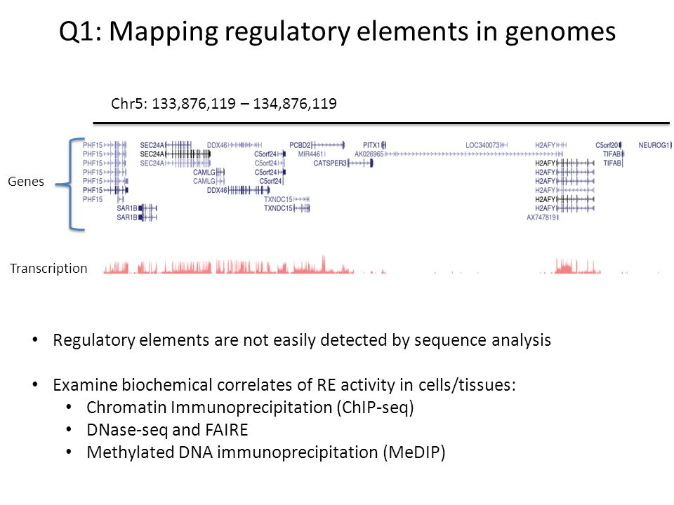 Q1: Mapping regulatory elements in genomes