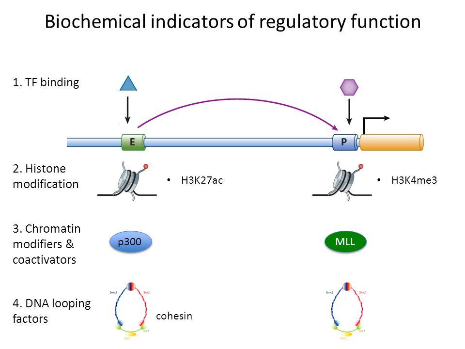 Biochemical indicators of regulatory function