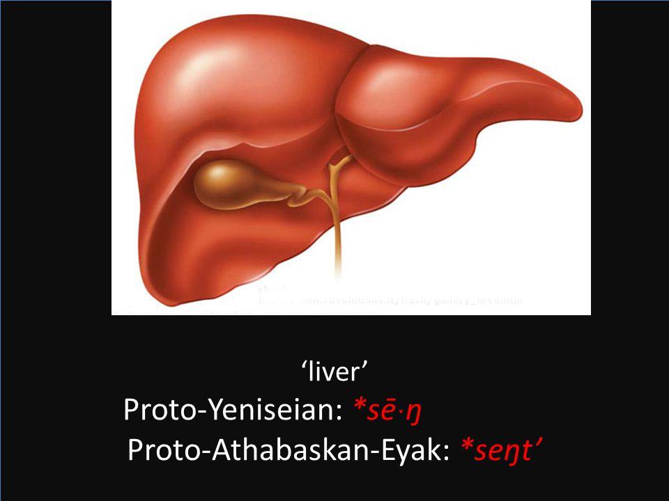 Proto-Athabaskan-Eyak: *seŋt'