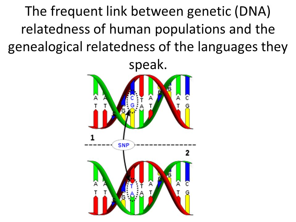 The frequent link between genetic (DNA) relatedness of human populations and the genealogical relatedness of the languages they speak.